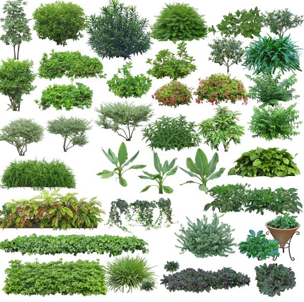 高清园林树木PS素材(9)-绿篱、花带、球灌