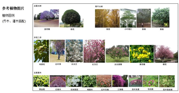 参考植物图片