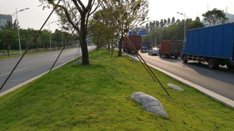 微地形在道路绿化中的实践应用