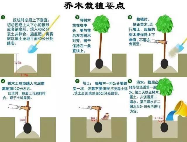 园林植物绿化常见问题解答