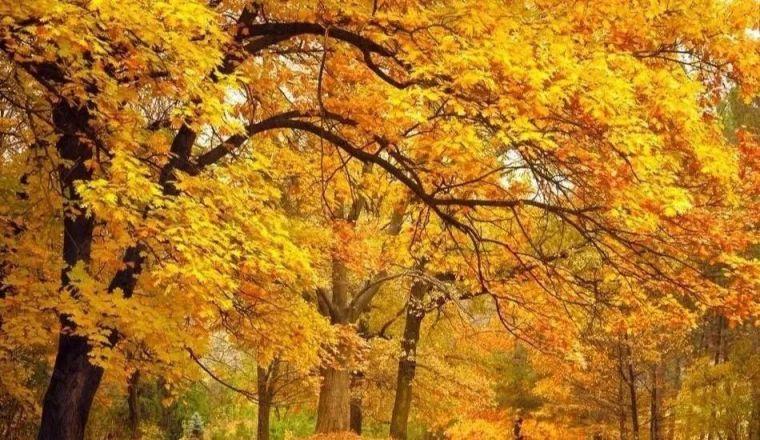 绿化苗木别名知多少?170种乔木全知道!