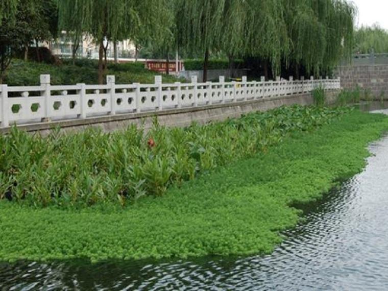 河水水体生态修复及景观设计方案