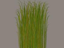 超清草地植物免抠素材