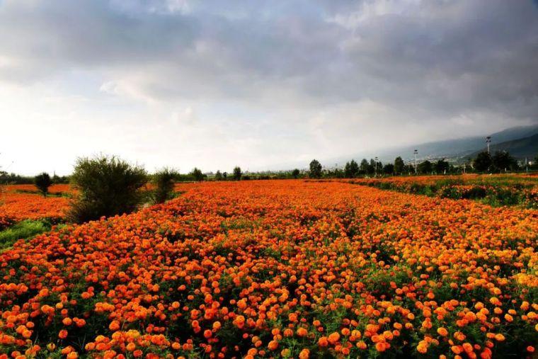 休闲农业规划,花卉设计的几种方式!_1