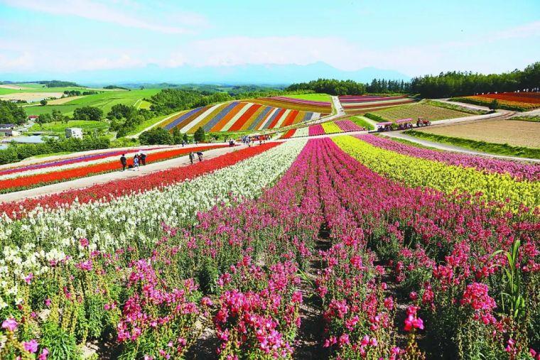 休闲农业规划,花卉设计的几种方式!_2