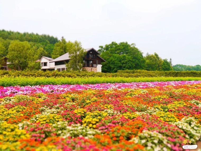 休闲农业规划,花卉设计的几种方式!_4