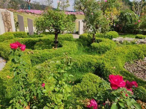 休闲农业规划,花卉设计的几种方式!_7