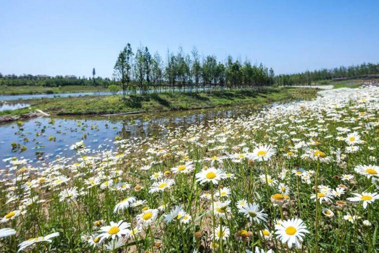 十条人工湿地景观设计宝典,你知道多少?_6