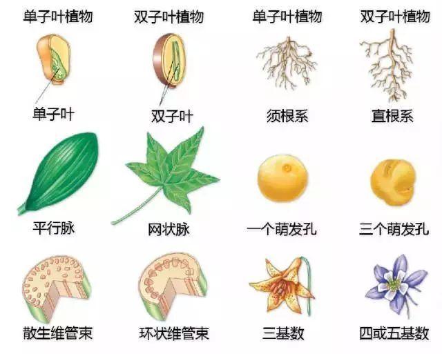 植物不认识?这里有最详细植物识别法!_7