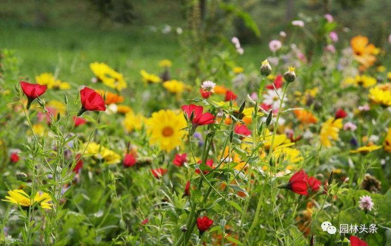 16种超耐旱草花,生如夏花就靠它们啦!_1