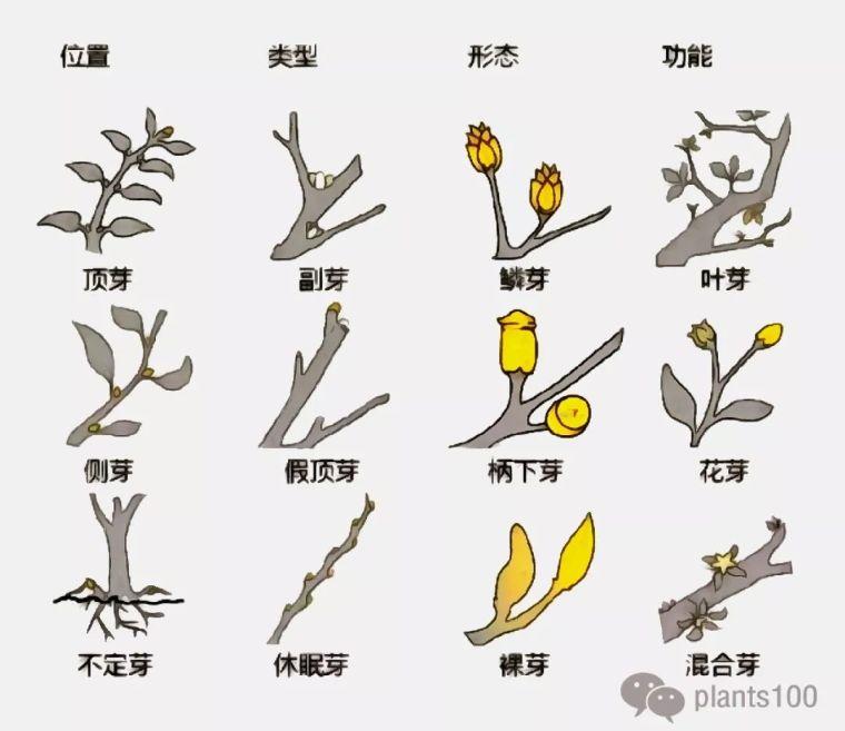 植物不认识?这里有最详细植物识别法!_2