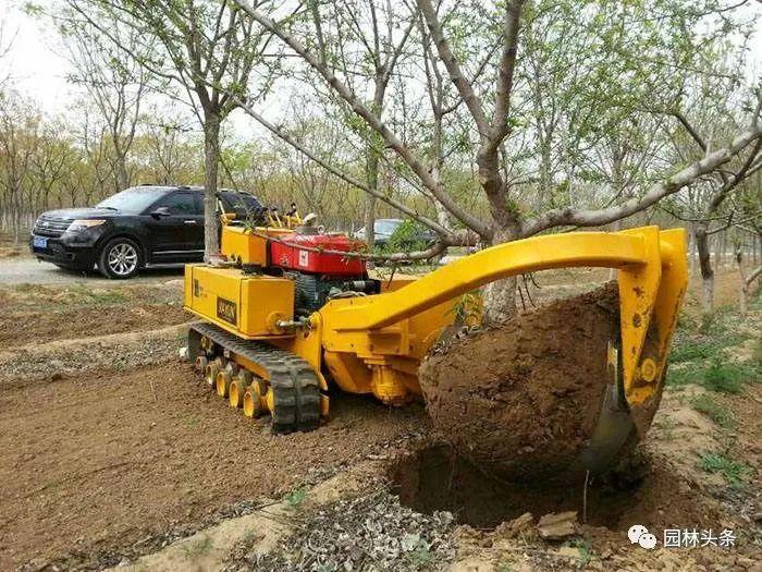 高温天到来,苗木这么起挖和包装提高成活率_2