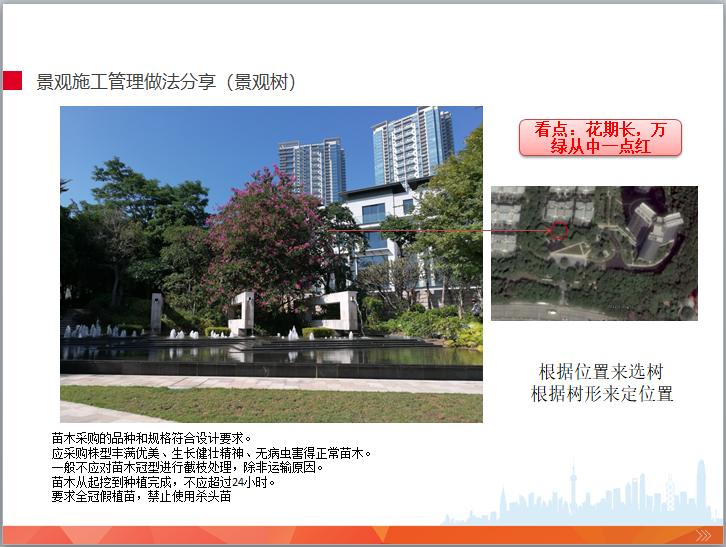 园林景观工程施工管理培训(图文并茂)-景观施工管理做法分享(景观树)