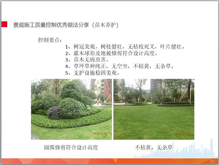 园林景观工程施工管理培训(图文并茂)-景观施工质量控制优秀做法分享(苗木养护)