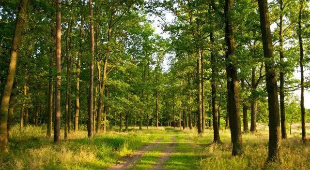 干货!园林植物全年养护要点_16