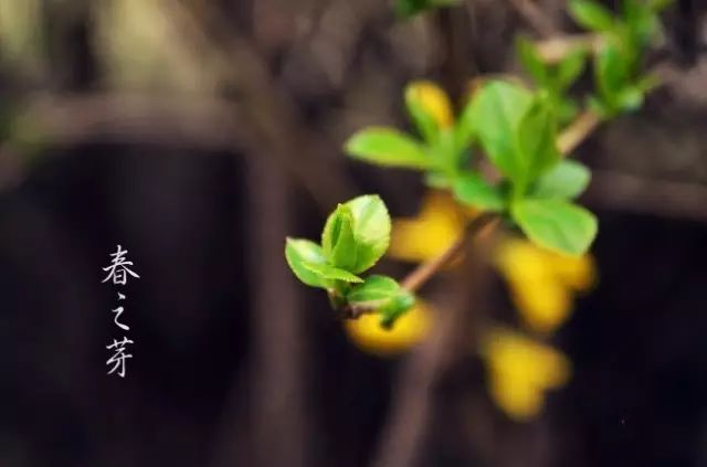 干货!园林植物全年养护要点_12