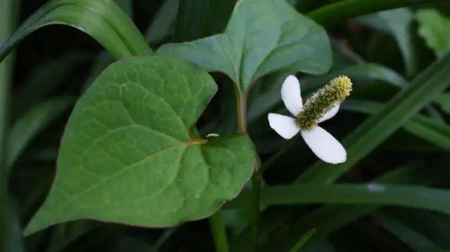 这些植物的名字,99%的人都会读错!_6