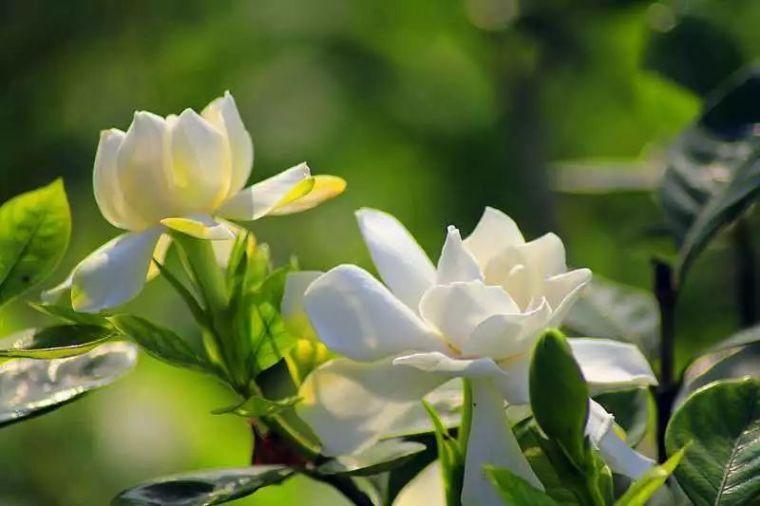 植物风水|庭院花园景观设计须知!_5