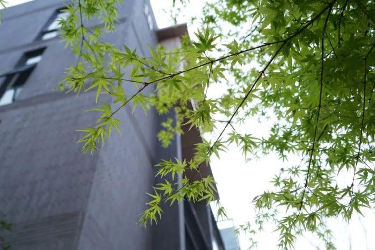 植物风水|庭院花园景观设计须知!_7