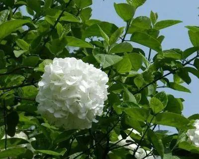 植物风水|庭院花园景观设计须知!_6