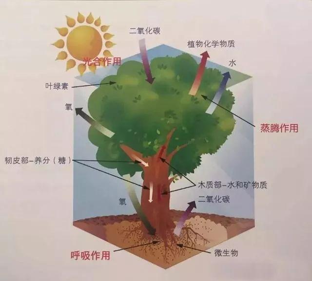 植物风水|庭院花园景观设计须知!_15