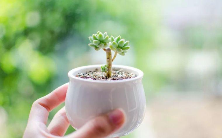 植物风水|庭院花园景观设计须知!_19