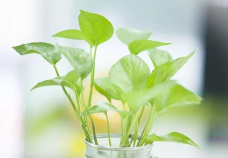 植物风水|庭院花园景观设计须知!_21