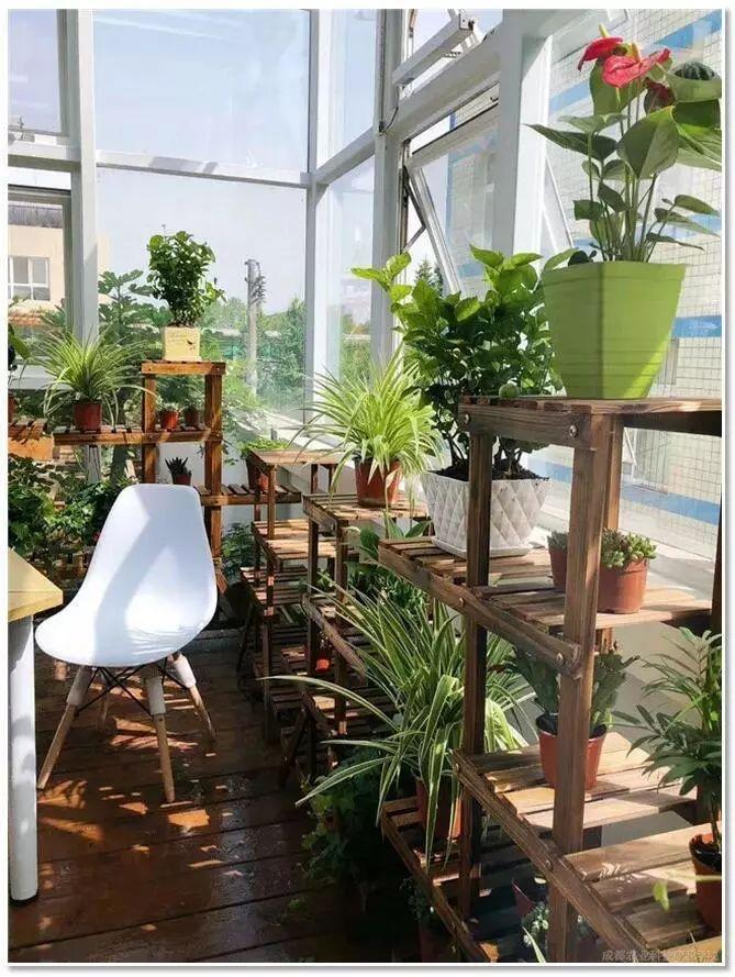 植物风水|庭院花园景观设计须知!_34