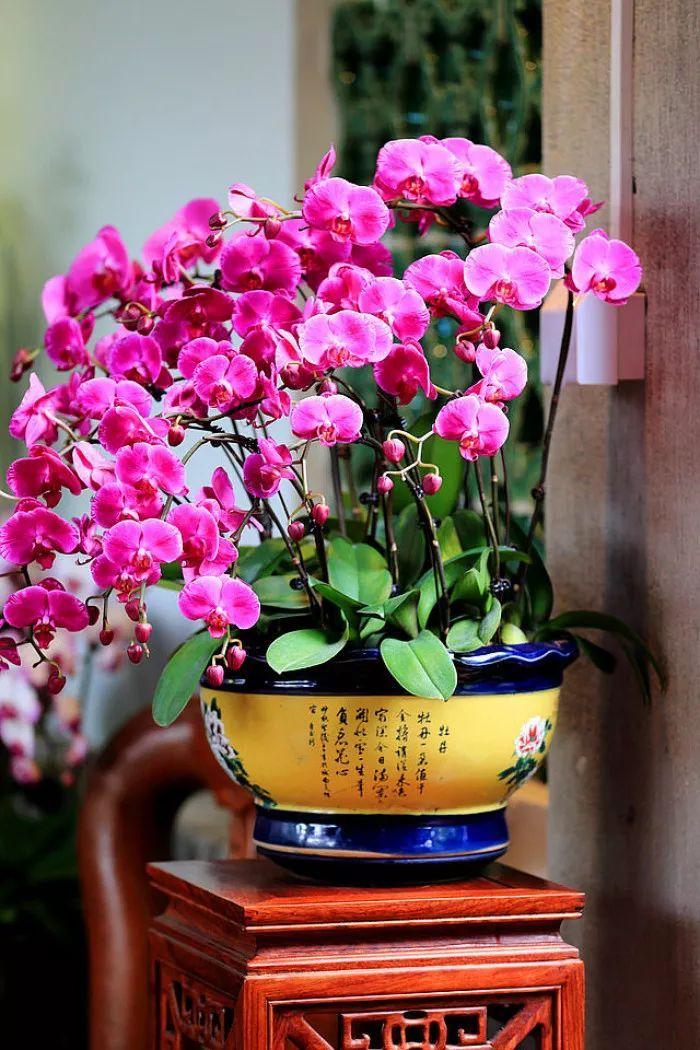 植物风水|庭院花园景观设计须知!_30