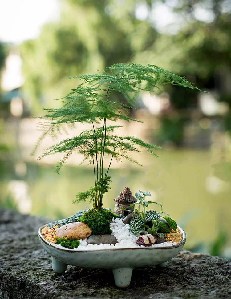 植物风水|庭院花园景观设计须知!_33
