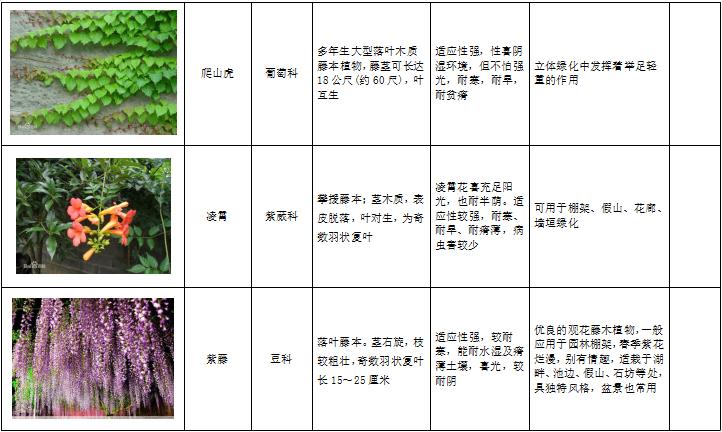 西北地区绿化植物分类图表-1