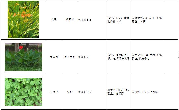 西北地区绿化植物分类图表-3