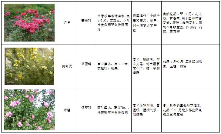 西北地区绿化植物分类图表-4