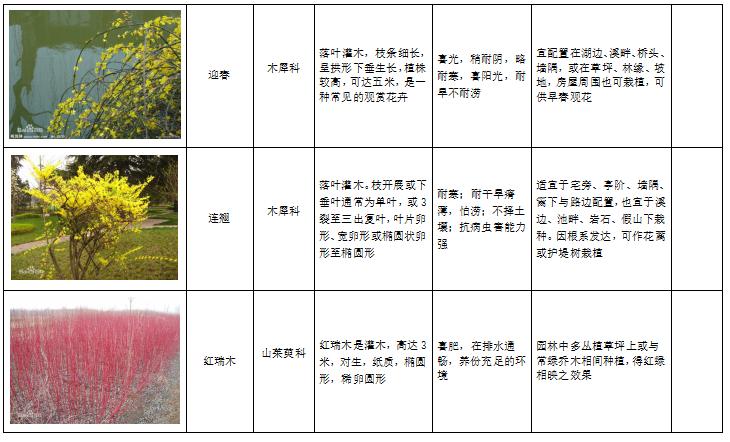 西北地区绿化植物分类图表-5