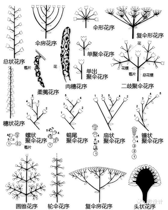 干货|最全的植物形态图解!_26