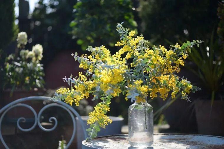 夏日花园的高级灰,值得拥有的20种银叶植物_47