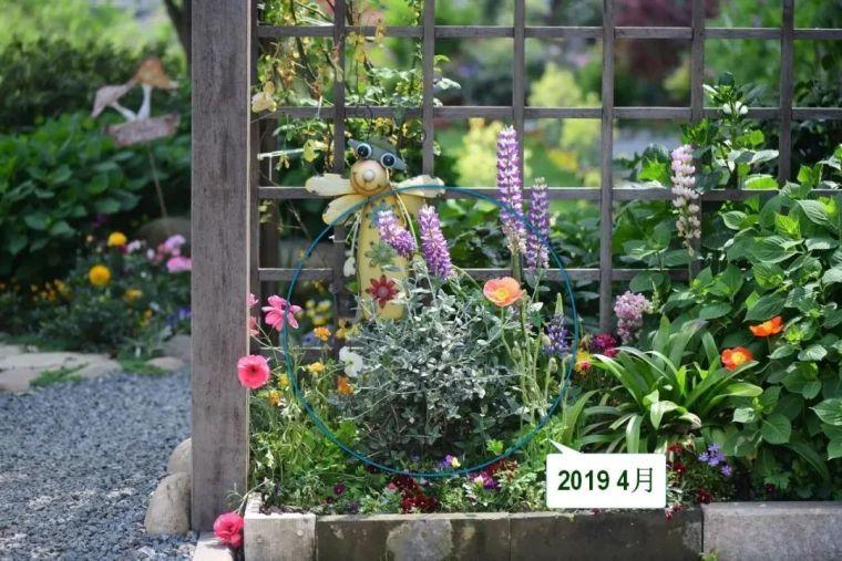 夏日花园的高级灰,值得拥有的20种银叶植物_28
