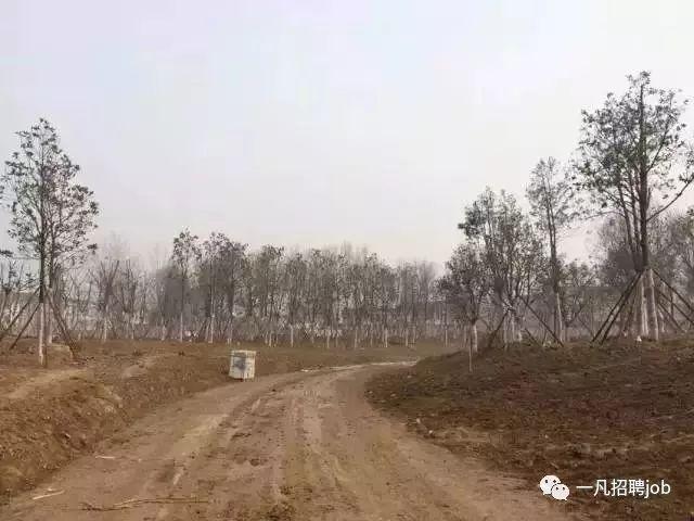收藏!难得一见的园林绿化施工过程全记录_4