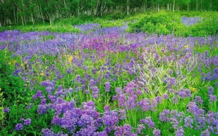 干货|超全园林地被植物应用,值得收藏!_9