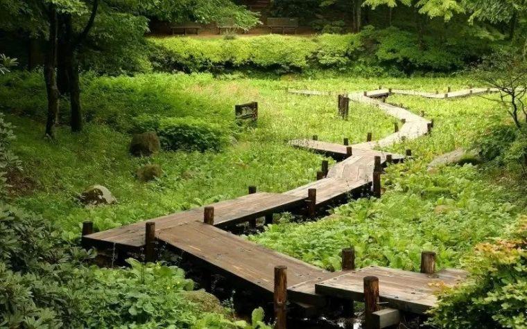 干货|超全园林地被植物应用,值得收藏!_11