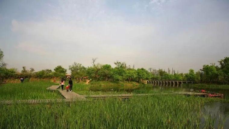 干货|超全园林地被植物应用,值得收藏!_12
