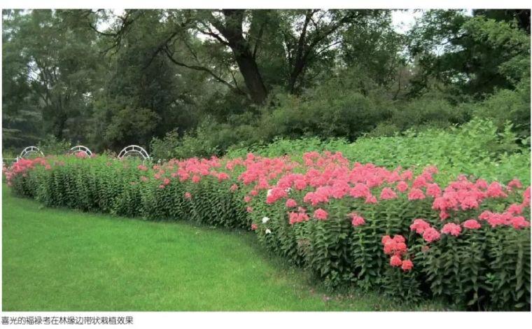 干货|超全园林地被植物应用,值得收藏!_16