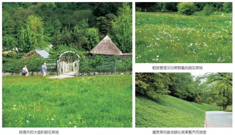 干货|超全园林地被植物应用,值得收藏!_14
