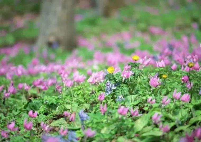 干货|超全园林地被植物应用,值得收藏!_20