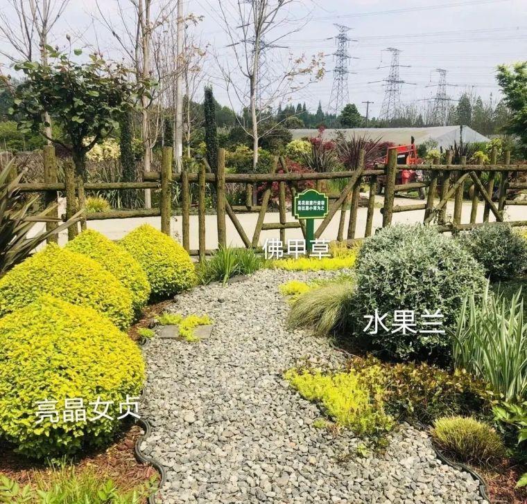 11月份常用的30种花境植物_11