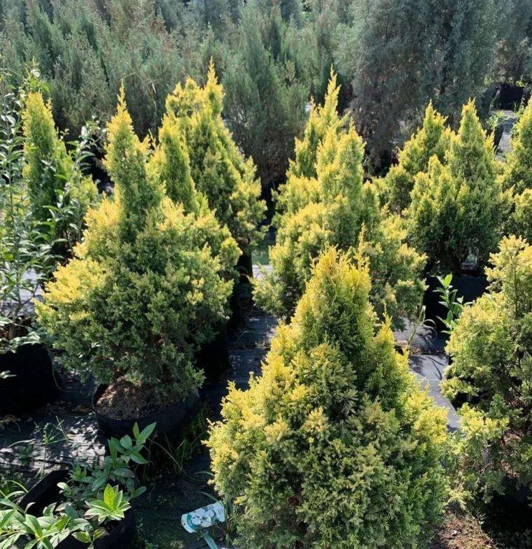 11月份常用的30种花境植物_16
