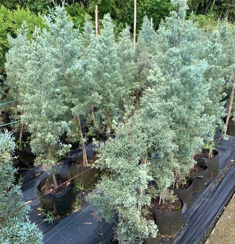 11月份常用的30种花境植物_15