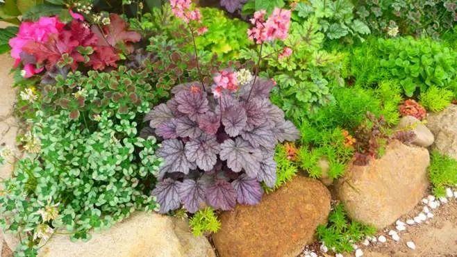11月份常用的30种花境植物_28