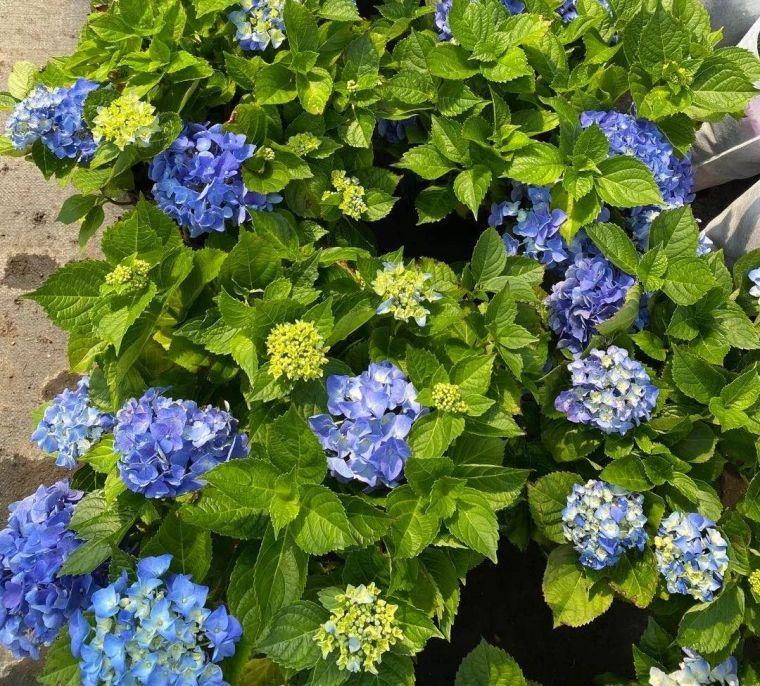 11月份常用的30种花境植物_34