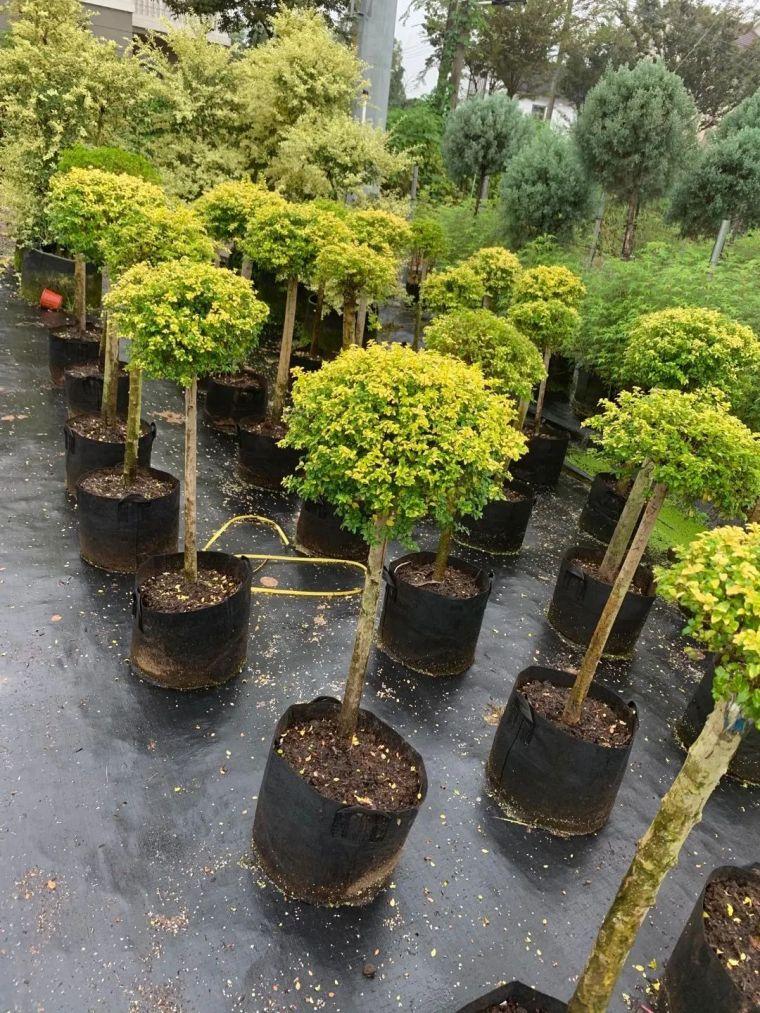 11月份常用的30种花境植物_40